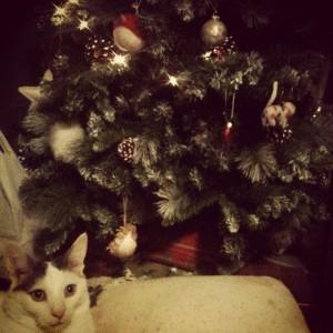 cat ally