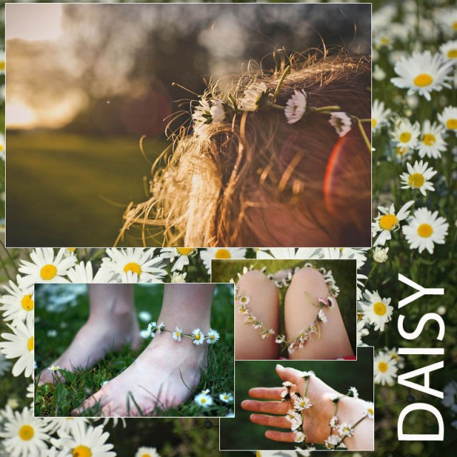DAISIES-blog-images